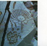18 p15 Grav ure rupestre Kirghizistan